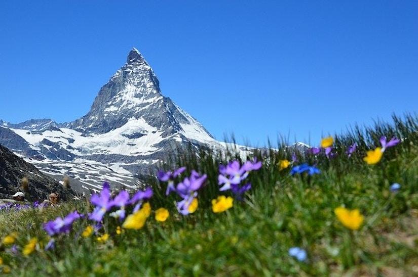 Bergwiese vor dem Matterhorn.