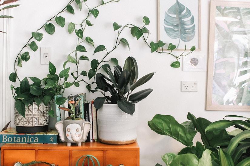 Verschiede Pflanzen in Blumentöpfen auf dem Regal