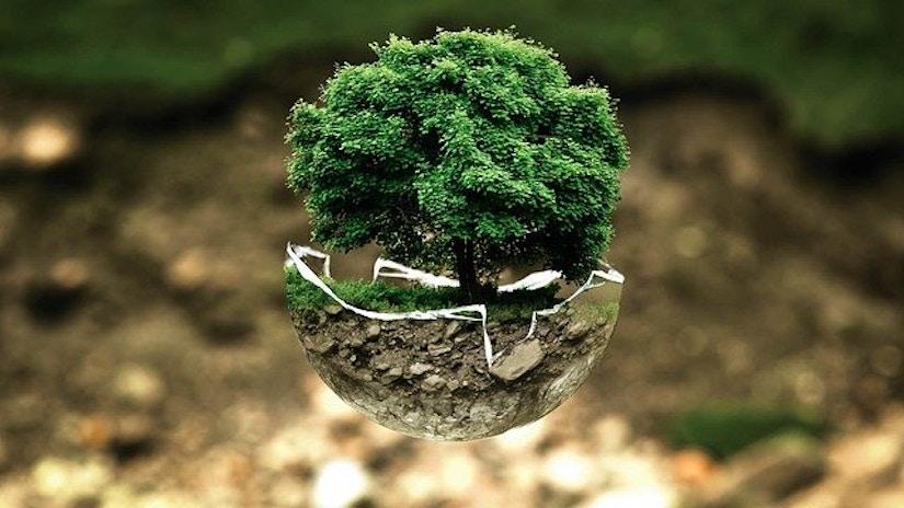 Baum, der aus Erde ragt