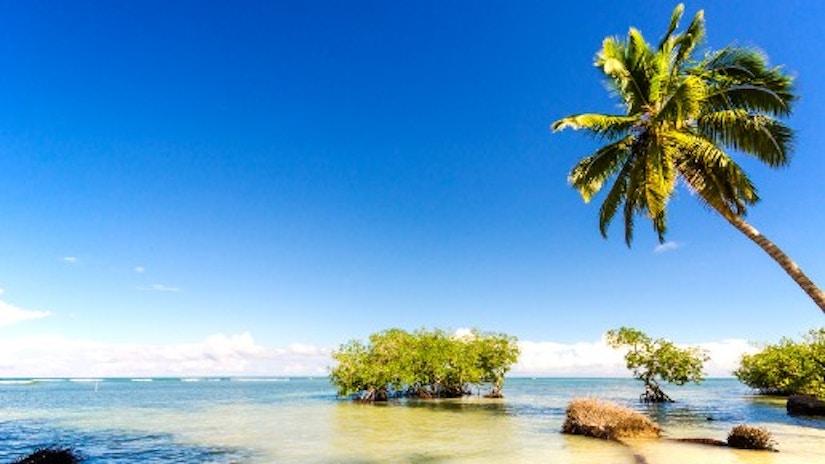Ein Strand mit Palme