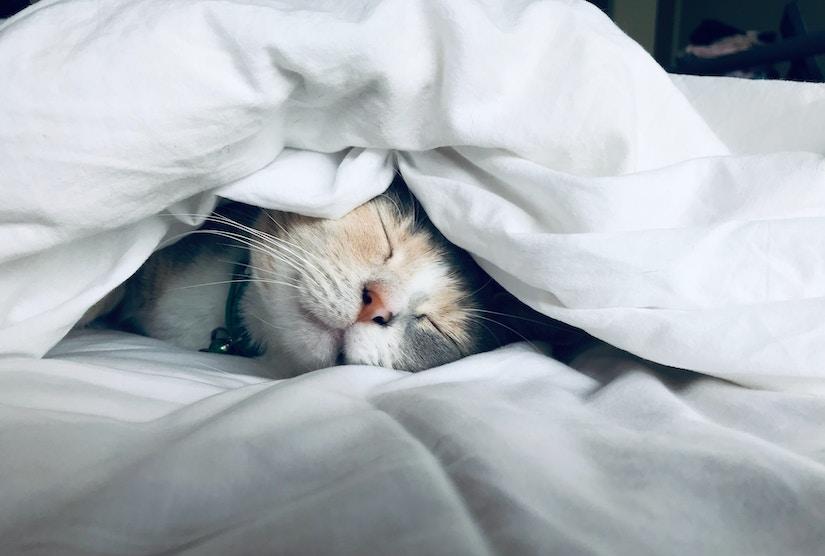 Katze liegt auf Bett unter Bettdecke