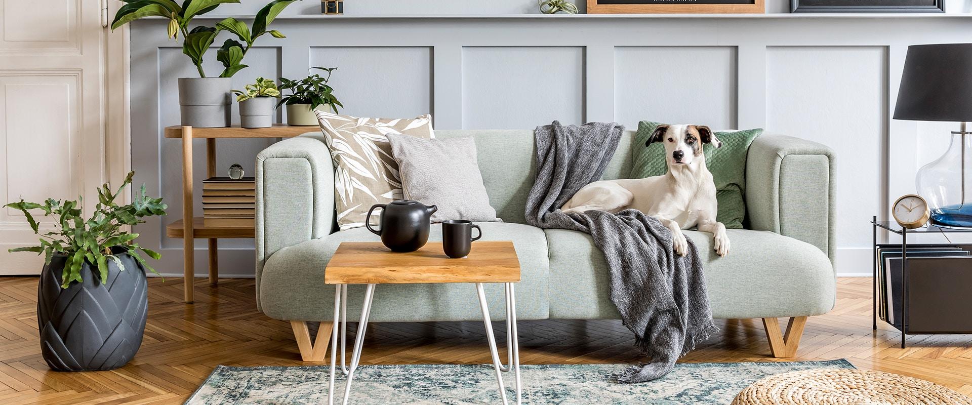 Ein Hund sitzt auf einem Sofa in einem stylischen Wohnzimmer.
