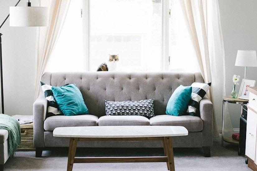 Wohnzimmer mit Couch, Lampen und einer Katze