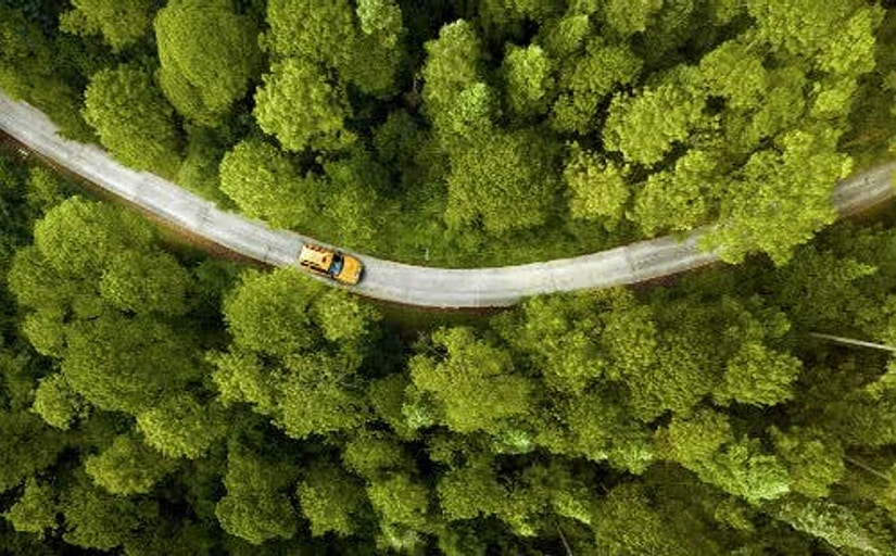 Auto fährt auf einer einsamen Straße im Wald