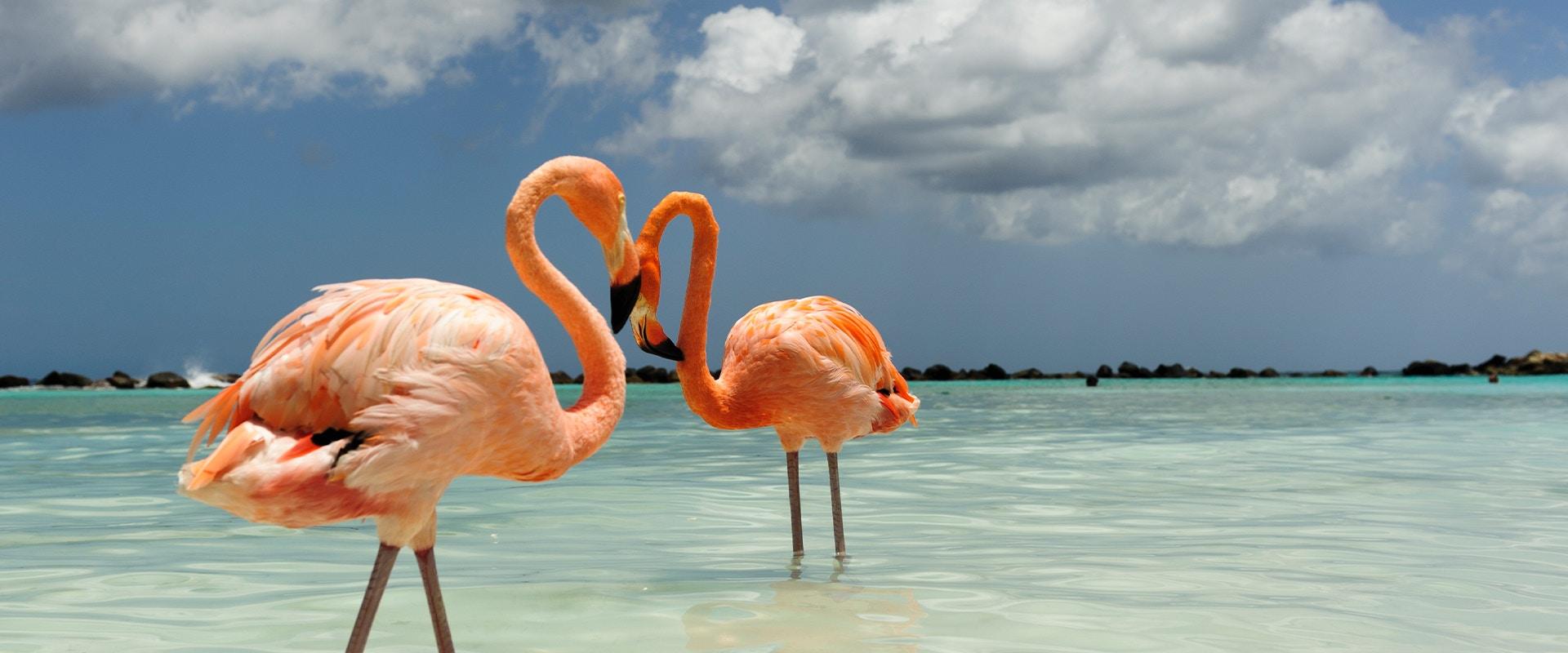 Zwei Flamingos stehen am Strand und bilden mit ihren Köpfen ein Herz.