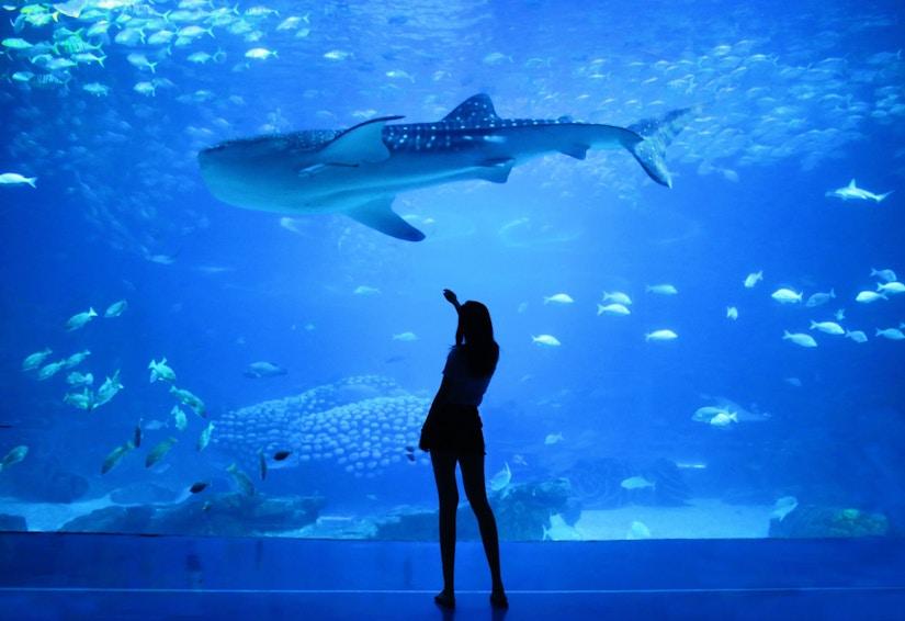 Mensch steht vor Aquariumwand mit Hai und kleinen Fischen im Hintergrund